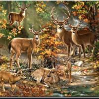 Hjort i skogen
