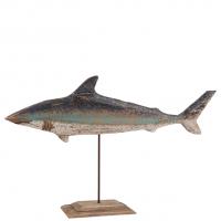 Shark sharky
