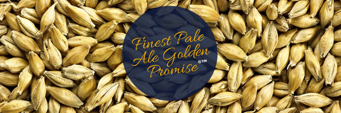 Golden Promise - Perfekt til Session, Pale Ales og IPA
