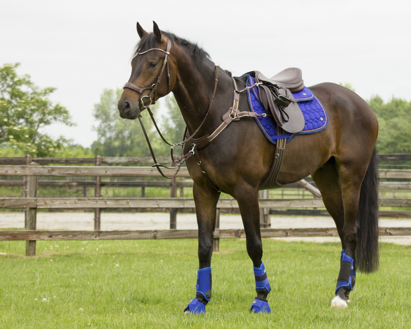 Eventing boots hind leg technical- Mange farger