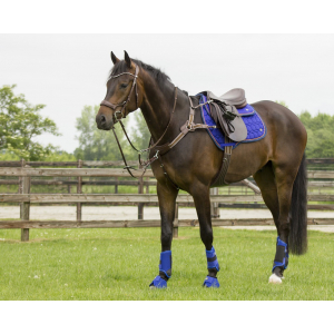 Eventing boots front leg technical