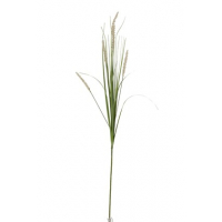 Branch Grasses+Horsetails