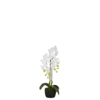 Orchid Fresh Touch White Small