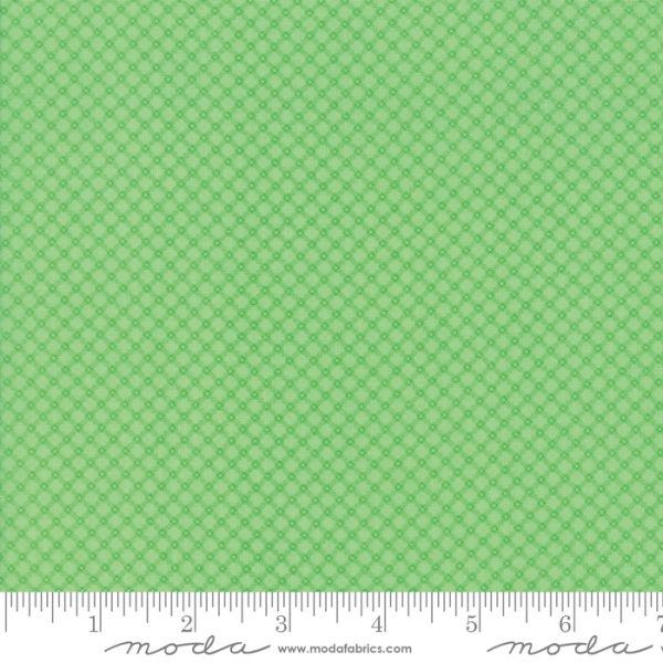 Fiddle dee green 50 cm