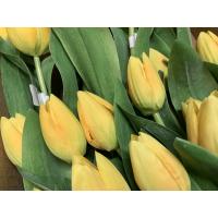 Tulipan gul lukket blomst
