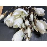 Magnolia hvit