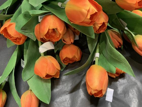 Tulipan oransj lys