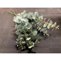 Eucalyptus  matt grønn