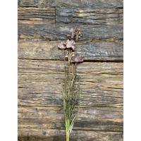 Stilk Lilla/brun med blomst og knopp