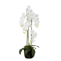 Orchid Fresh Touch White Large