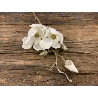 Magnolia med is