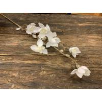 Magnolia med snø