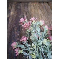 Sukkulent m/rosa blomster