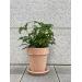 Terrakotta potte 21cm - inkl underfat