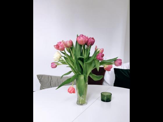 Tulipaner i bunt