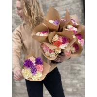 Nellik - langvarig blomster