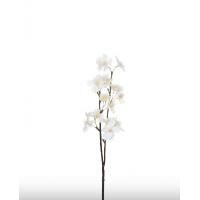 Gren med hvite blomster