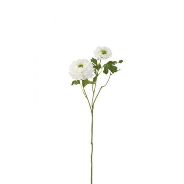 Buttercup hvit