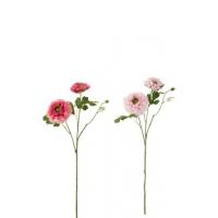 Buttercup rosa