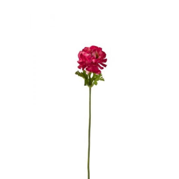 Ranunculus Blomst