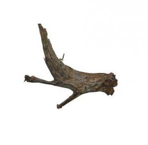 Mangroverot XL 50-70cm