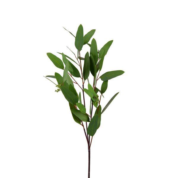 Eucalyptus grønn m/bær