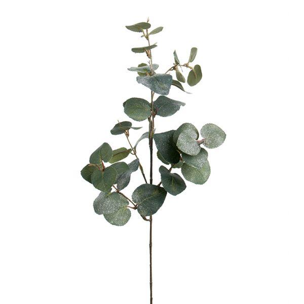 Eucalyptus m/snø