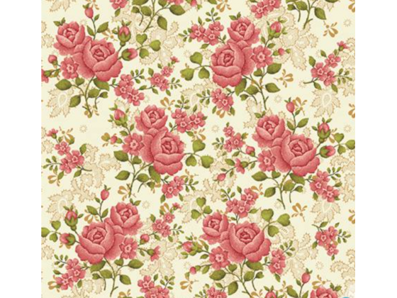 Cream Climbing Rose