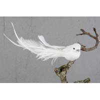 Hvit klip fugl